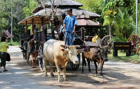 Oxcart Riding